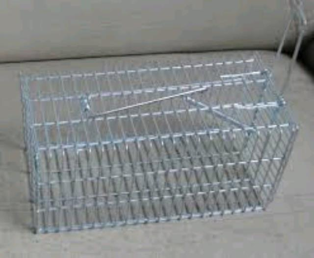 Where to find ANIMAL TRAP in Perth